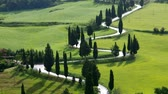 agriculture : Tuscany cypress curve