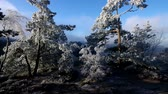 saxon switzerland : Elbe sandstone mountains in winter and hoarfrost Stock Footage