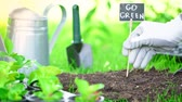 lopata : partial view of gardener in glove stucking nameplate with inscription in ground in garden Dostupné videozáznamy