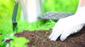 ültetés : partial view of gardener in gloves planting green sprout in ground in garden