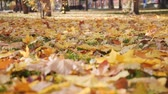 Leaves falling in the autumn park awash in bright sunlight - camera hover over the ground level
