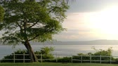 dorsz : 4K footage of an ocean view with a tree and white picket fence.