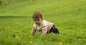 alergia : Cute baby girl playing with dandelions in the park. Shot in 4K RAW.
