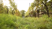 leaf : vineyard Stock Footage