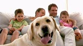 pet : Family sitting on the couch with labrador dog in foreground in slow motion Stock Footage
