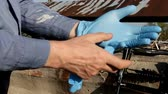 instalador : man puts on blue rubber gloves for work, closeup Archivo de Video