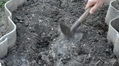 gevşemiş : Mens hands loosen the dry soil with a hoe and remove the pebbles Stok Video