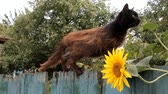 özlem : brown, thin skinny cat climbs the old fence
