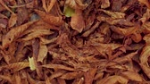 сентябрь : Carpet foem dried leaves on the ground. Стоковые видеозаписи