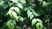 soft fruits : Green leave and rain forest hit by wind