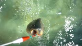 animali : Fish Hooked A Fishing Line