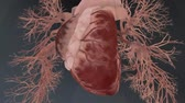 atrium : anatomical model of heart beat with different effects Stock Footage