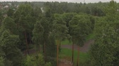 conífero : Aerial survey epic forest panoramas in Vyborg, Mon Repos park. Monrepos north epic coniferous forest panoramas footage. Top down view of rocky island. aerial video coniferous tree