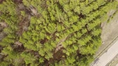 moha : aerial survey over planting coniferous forests pine planting. Panorama of coniferous forest from the air. birds eye view coniferous forest, tree plantations. aerial adventure over a coniferous forest Stock mozgókép