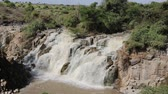 Нил : in ethiopia africa the awash national park and the falls nature wild Стоковые видеозаписи