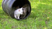 color : Cute kittens playing outdoor, on the green grass. Full HD Stock Footage