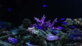 selfish : Corals and exotic marine fish. Ocean life. The oceanarium. Scene under water. Large aquarium. Wild nature. Tropical inhabitants