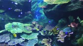 Corals and exotic marine fish. Ocean life. Scene under water. Large aquarium. Wild nature. Tropical inhabitants
