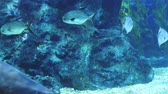 Corals, shark and marine fish. Ocean life. The oceanarium. Scene under water. Large aquarium. Wild nature. Tropical inhabitants