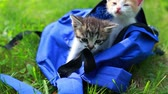 Two cute kittens looking from the bag the first time outdoors. Adorable kitty on the grass. Animal and nature Vídeos