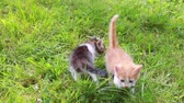 Two small cats in the grass. Cute kitten playing in the garden Vídeos
