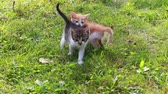 Two small cats playing in the grass. Cute kitten playing in the garden