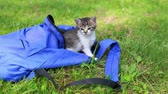 vime : Two cute kittens looking from the bag the first time outdoors. Adorable kitty on the grass. Animal and nature Vídeos