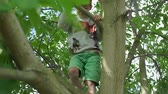 subida : child 7 years climbing a tree in the summer