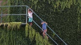 korkuluk : two boys climbing stairs in the plants on a sunny day, glasses and a cap Stok Video