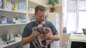 cat strofe : A man doctor holds three sphynx breed cats in a veterinary clinic. Bald cat. Smile