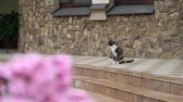 quintal : Cat in a backyard garden near entrance to private house outdoors