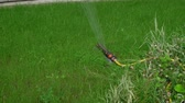 gramíneo : Automatic sprinkler system watering the lawn on a background of green grass near house in a city