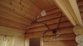 エルク : horns of a deer on a wooden wall in countryside house