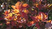сентябрь : Bright colorful autumn leaves on trees and bushes