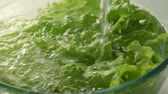 de baixa caloria : water pouring to the fresh green salad Stock Footage