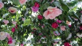 vislumbre : Wedding arch decoration of fresh flowers roses fare ray sun through the leaves