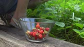 Woman picking organic strawberry to glass bowl in old english garden with green background Summertime Stock Footage