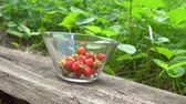 Fresh organic strawberries in glass bowl in old english garden with green background Summertime Stock Footage