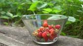 Woman hand picking fresh organic strawberry to glass bowl in old english garden with green background Close up Summertime Wideo