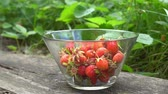 Close up of glass bowl with fresh organic strawberries in old garden with green background Summertime Stock Footage
