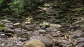 River in mountain tropical wood with large stones