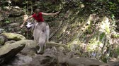 Young beautiful barefoot woman with malamute dog walks in mountain wood on the river