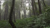 Heavy rain in a tropical forest in mountains Wideo