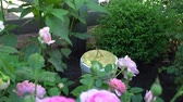 Sundial in an English garden on background of roses