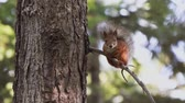 plazí : squirrel sits on a tree branch.