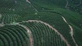 gerar : coffee plantations in Brazil (drone footage) Stock Footage