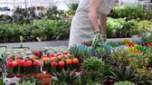 checagem : Young florist checking  growing plants - panning Stock Footage