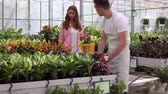 horticultura : young florist sale flowers in glassgarden Stock Footage