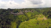 Aerial flight over  asian rice field , rice Terraces in Bali, Indonesia
