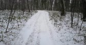 borovice : Winter forest with snow